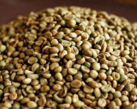 Washed Arabica Green Coffee Beans Grade 1 Screen 18