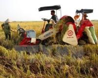 Giảm tổn thất trong sản xuất nông nghiệp: Tiến độ vẫn chậm